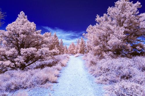 Bryce Canyon IR 01